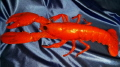 Where to rent DECORATIVE LOBSTER in Omaha NE